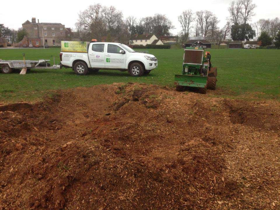 After stump removal